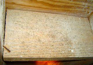 Black Mold On Floor Joists In Crawl E Carpet Vidalondon