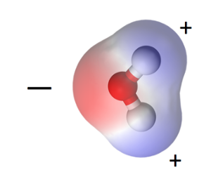 The water molecule is polar, with a positive end and a negative end.