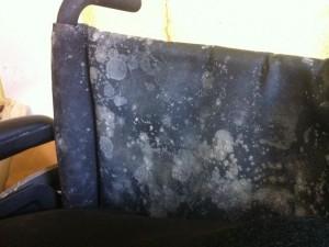 basement-moisture-problem-mold-humidity.jpg
