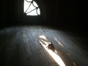 dead bird attic halloween nate adams