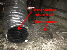 A disconnected duct next to a dead possum