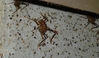 crawl space camel cricket air leakage building envelope